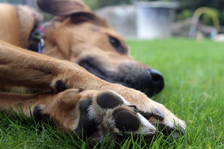 Tierheilpraktik - Tiergesundheit - Vital-Blog-Beiträge von Gastautorin Angela Müller